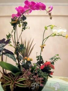 Tabletop Garden - Bento Box